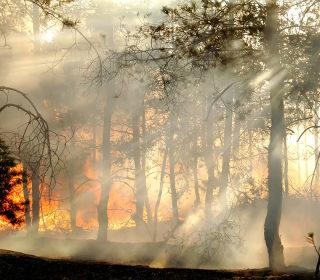 Az erőművek is tehetnek az erdőtüzek ellen